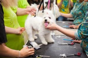 Curso de Peluquería y Estética Canina