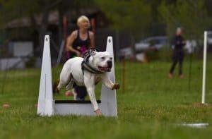 Curso Online de Adiestramiento Canino