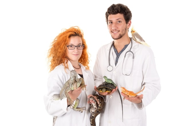 Curso Online de Auxiliar Veterinario Especialista en Animales Exóticos o NAC
