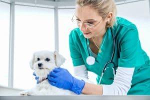 Curso Online de Auxiliar de Clínica Veterinaria