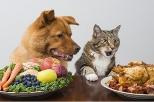 Curso de Nutricion y Dietetica Veterinaria