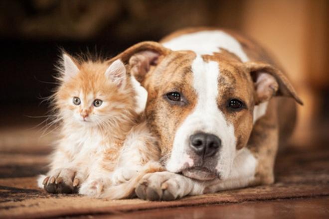 Curso de Psicologia Canina y Felina