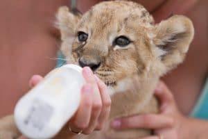 Curso de Auxiliar Veterinario de Zoológico y de Fauna Salvaje y Silvestre
