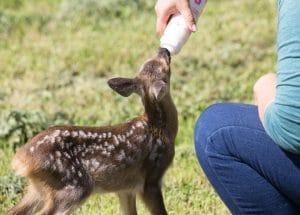 Curso Online de Auxiliar Veterinario de Zoológico y de Fauna Salvaje y Silvestre