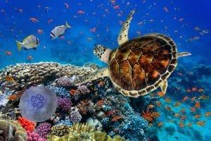 Curso Online de Especialista en Cetáceos y otros Animales Marinos