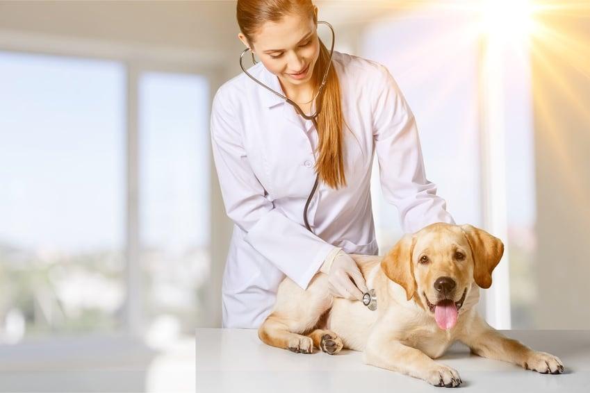 Curso Online de Asistente de Atención Clínica en Centros Veterinarios ATV