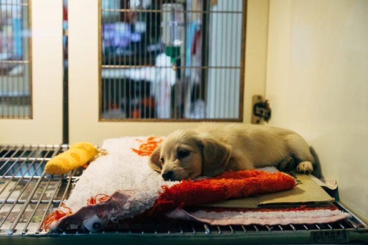 cómo ser auxiliar de veterinaria | Titulae